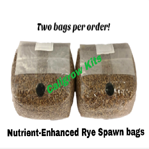 Rye berry spawn bags